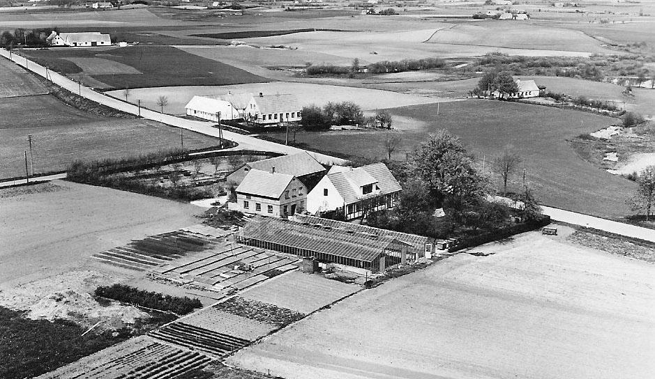 rosenvaenge-1955